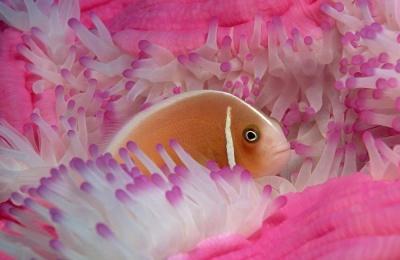 دنیای زیر آب، دنیایی باشکوه و جذاب
